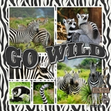 Zoo Days Templates