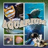 Aquarium Days Templates