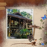 Escape to the Rainforest - Decorated Papers