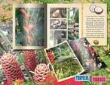 Escape on a Tropical Adventure Kit