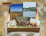 Artistic License Memory Boxes Bonus Bundle 11x8.5
