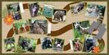 Animal House - Zoo SLF Templates
